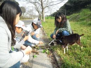 子どもヤギも雑草をもぐもぐ食べてたね!