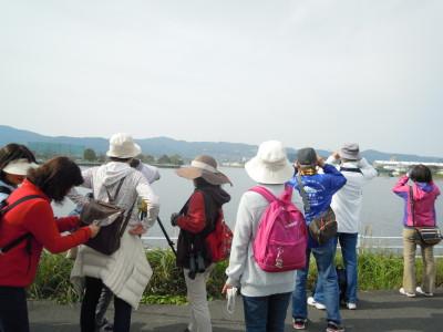 浮洲池にて水鳥観察