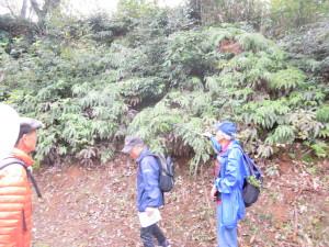 森の植物観察で森林浴
