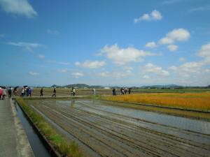 全国でもめずらしい麦と米の二毛作地域です。