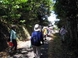 竹林沿いの小道は涼しい日陰