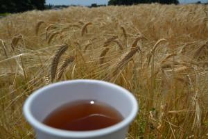 よく枯れた麦の穂。麦茶でひと休み